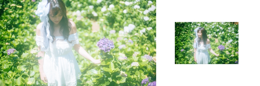 艾琳繡球花_2