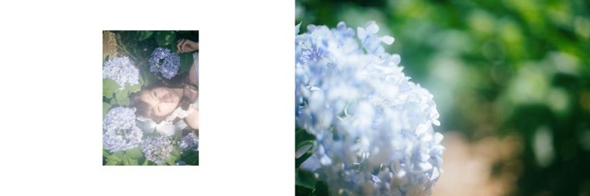 艾琳繡球花_3