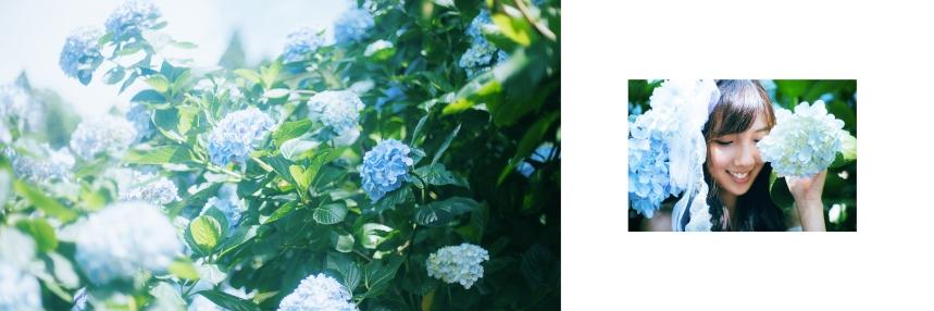 艾琳繡球花_5