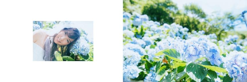 艾琳繡球花_7