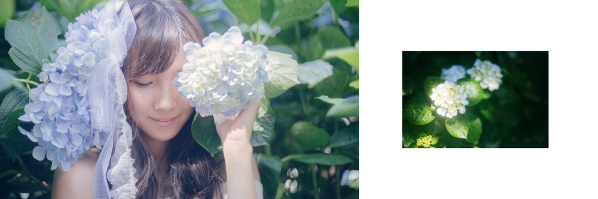 艾琳繡球花_9
